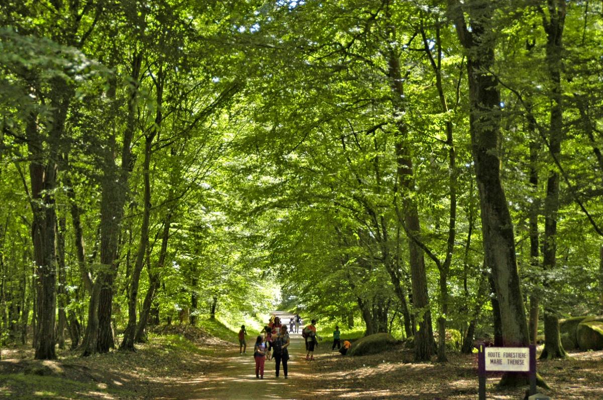 •Route Marie-Thérèse N1
