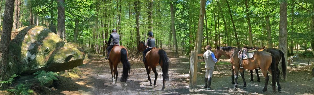 Préparation à la haute compétition ou promenade équestre de loisir, Fontainebleau reste la capitale du cheval…